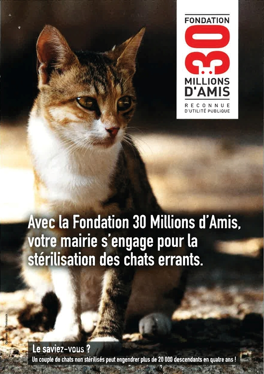 chats errants affiche