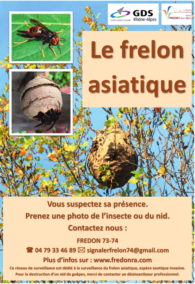 frelon asiatique affiche